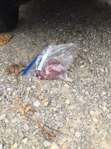 A heart in a bag sits under a vehicle on Franklin Street. Residents of the house found it after their home was burglarized.