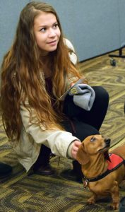 A student plays with a small dachshund.