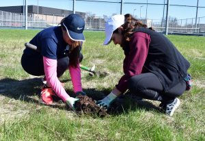 Zeta Tau Alpha members Kerry Bolduc and Brittany Mchalzky work together to relocate prairie plants to behind the tennis court.
