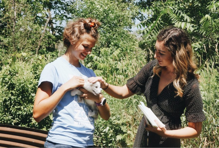 Nikki Brahm pets an arctic fox and conducts an interview at the Shalom Wildlife Center in West Bend as a reporting intern for the Washington County Daily News.