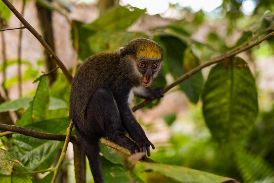 Taylor photographs a wild monkey during his travels while studying over seas.
