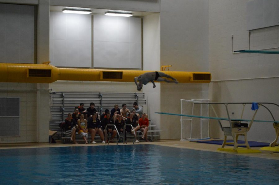 Diver Matt Wilke twists his way to a first-place finish.