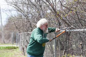 volunteer trims branches back from fence