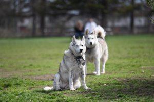 Titans clean, landscape Best Friends Dog Park