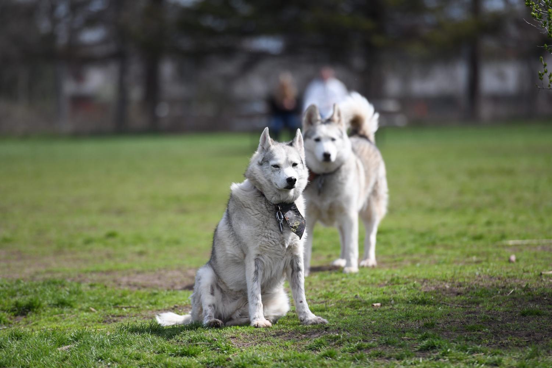 Titan Volunteers help clean up and landscape the Best Friends Dog Park.
