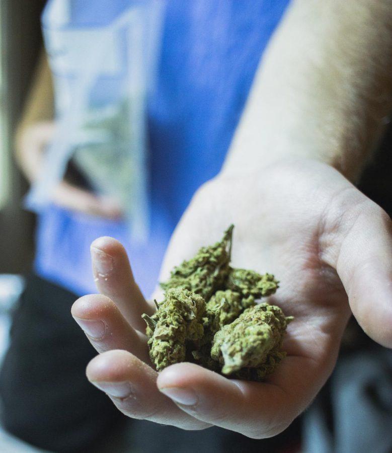 An+anonymous+UWO+student+displays+a+handful+of+the+marijuana+%E2%80%98nugs%E2%80%99+they+sell+and+smoke.