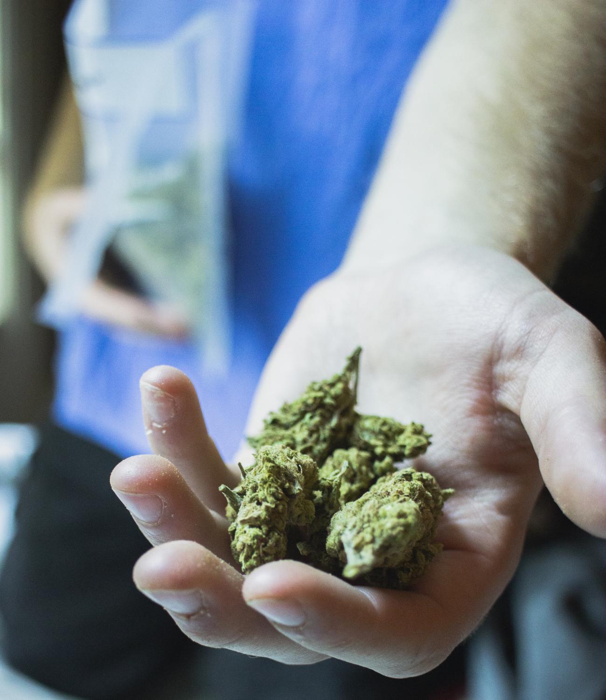 An anonymous UWO student displays a handful of the marijuana 'nugs' they sell and smoke.