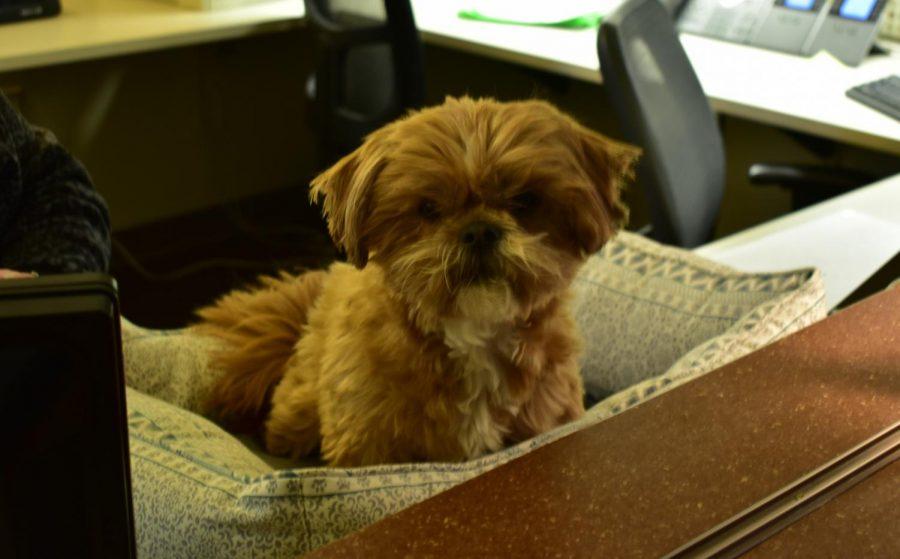 UW Oshkosh gets new therapy dog