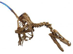 UWO research examines ancient Velociraptors