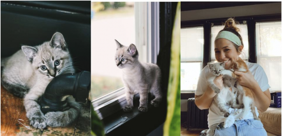 Courtesy of Abby Bullard Bullard adopted two cats, Maui and Miles, to help improve her mental health during the pandemic.