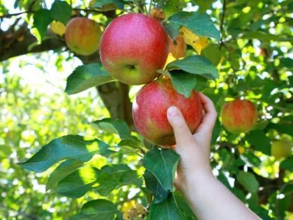 Courtesy of Rassmussen's Apple Orchard's Facebook page There are so many activities to do in the fall before it gets too cold.